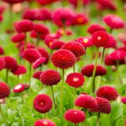 summer_red_flowers-3840x2160